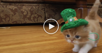 This Kitten Dresses Up For St. Patricks Day And Gives Us A Reason To Smile… SOO Cute!
