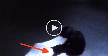This Kitten Notices His Shadow And Gets Really Confused, So He Decides He Must ATTACK!