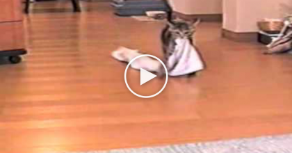 What This Little Kitty Does With A Towel Is Absolutely Adorable…Could This Get Any Cuter?!