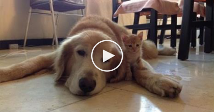 When These Two Met, It Was Love At First Sight…But What They're Doing Now? ADORABLE!