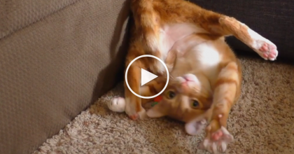 He Gave Cole And Marmalade A New Toy, But Just WATCH What's Happening Now…LOL