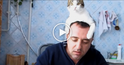 When He Starts Eating, This Curious Kitty Becomes The Most Adorable Harassment Ever…