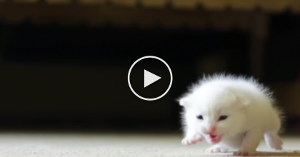 Kitten Was Found Helpless And Near-Death, Now Watch What It Took To Save Him…