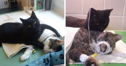 Something Amazing Is Happening At This Polish Animal Shelter All Because Of One 'Nurse Cat'