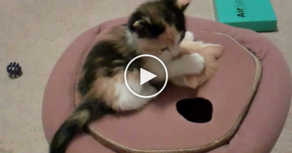 What Happens When These Kittens Discover The New Toy?  It's Almost TOO Cute To Handle…