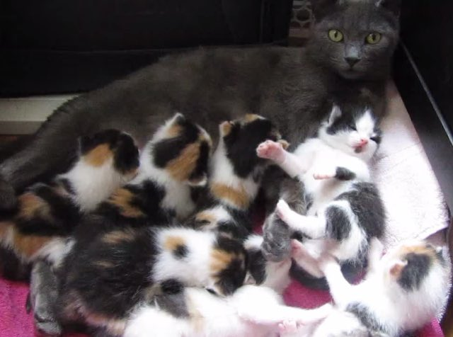 how to take care of a baby kitten without mom