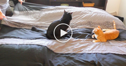 Every Time He Makes his Bed, It Takes A Long Time… The Reason Why? Just Ask The Cats!