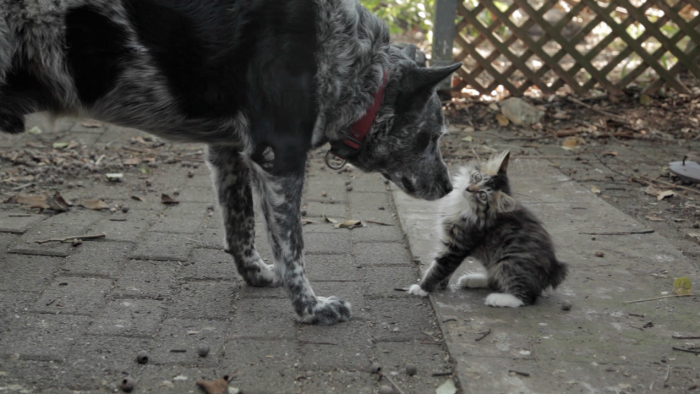 dog-and-cat-caregiver-3