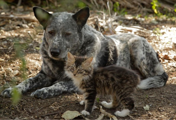 dog-and-cat-caregiver