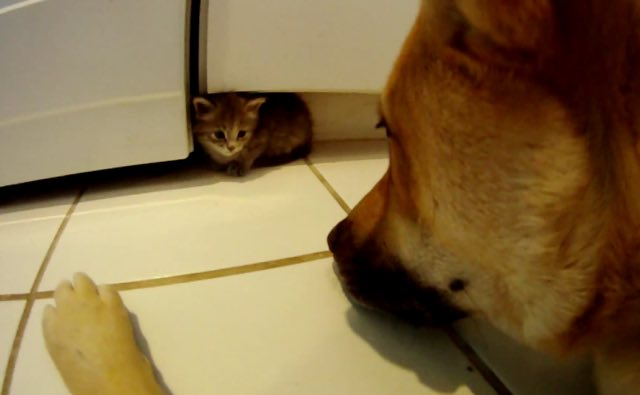 kitten-and-dog-2