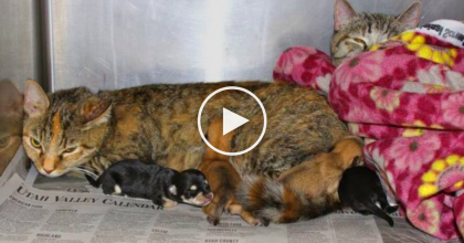 Mama Cat Does Something Very Special For Some Abandoned Puppies.
