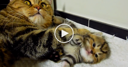 Mama Cat Has A Conversation With Her Kittens And It Doesn't Get Much Cuter Than This!