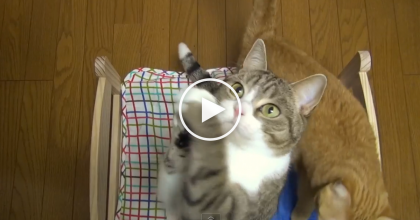 "She Got Them A Cat-Sized Bed, But Just Watch Their Reaction…You'll Say ""AWW"" When You See THIS!"