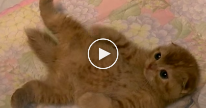 You'll 'AWW' Out Loud, When You This Kitten Try To Catch His Humans Hand… SOO Cute!!