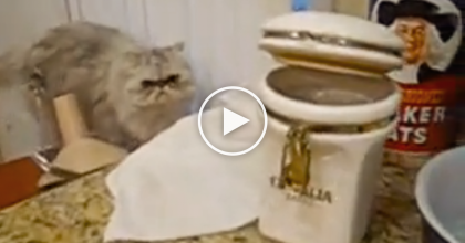 This Cat Empties The Cookie Jar. Wait Till You Find Out Why, You Won't Stop Laughing!