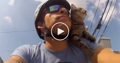 This Cat Enjoys The View Every Day, While Doing Something You'd Never Expect… WATCH