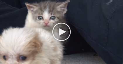 Watch What Happens When This Rescue Kitten Meets His New Best Friend For The First Time!