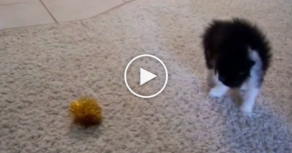 This Kitten Noticed A Ball For The First Time, So They Started Recording… Oh My!