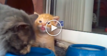 This Momma Cat Teaches Her Baby How To Drink, But Watch To See His Reaction