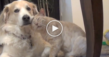 This Shy Kitty Meets A Dog For The First Time. What They Recorded Will Melt Your Heart!