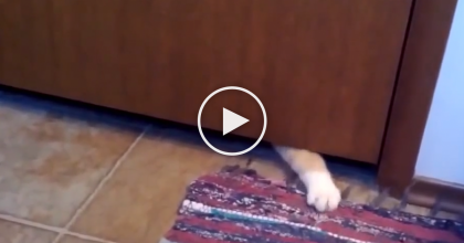 This Sneaky Cat-Thief Try's To Steal Something Right From Under His Owners Nose.