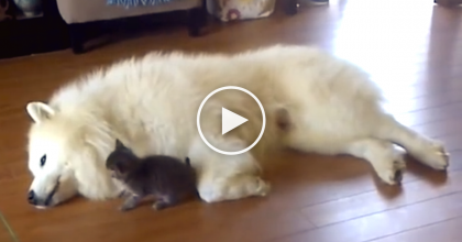 This Tiny Kitten Has The Biggest New Friend Ever And They Totally Love Each Other! WATCH