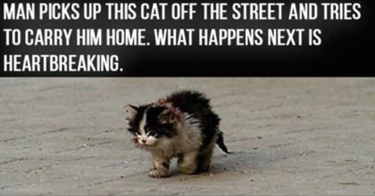 People Said Not To Touch This Cat, But This Guy Did Anyway…This Is Heartbreaking