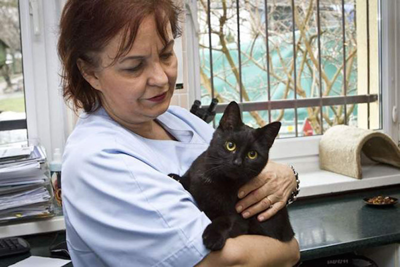 veterinary-nurse-cat-poland-2