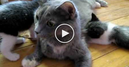 Mama Cat Calls Her Kittens For Lunch, But WATCH How She Does It… SOO Adorable!!