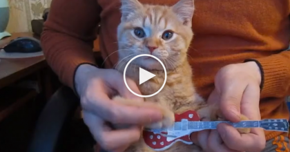 Watch What Happens When This Top Feline Guitar Player Gets Her 'Paws' On A Guitar!