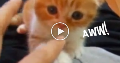 What Happens When This Kitten Comes Running Over?? It's Just TOO Darn Adorable!
