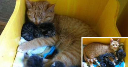 Abandoned Kittens Were Found In A Box, But When You See The Ending… AMAZING.