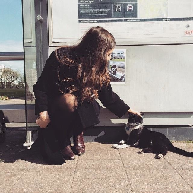 cat-at-buss-station-11