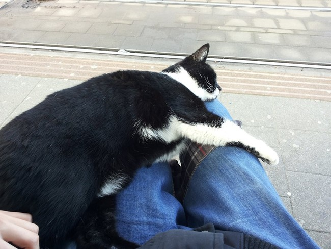 cat-at-buss-station-2