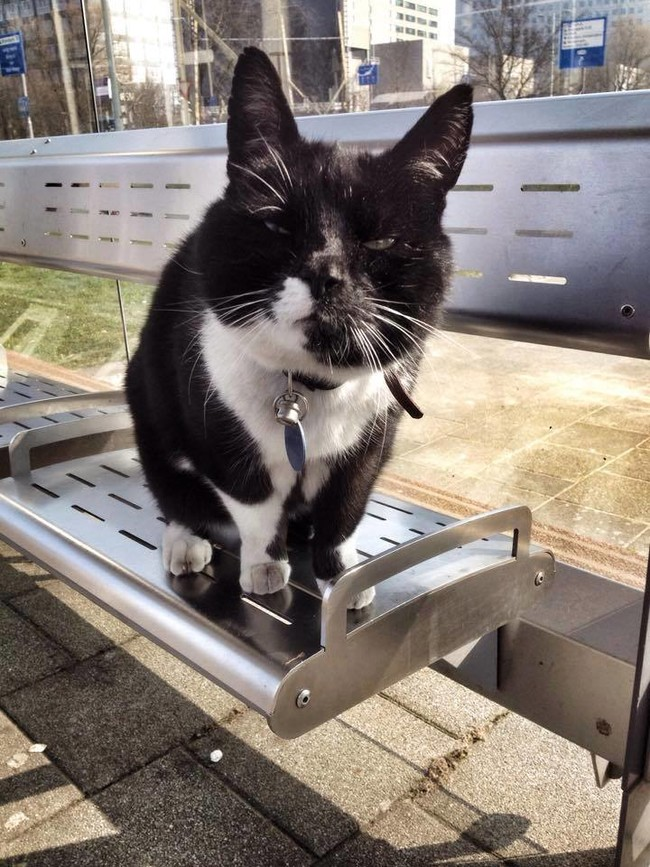 cat-at-buss-station-6