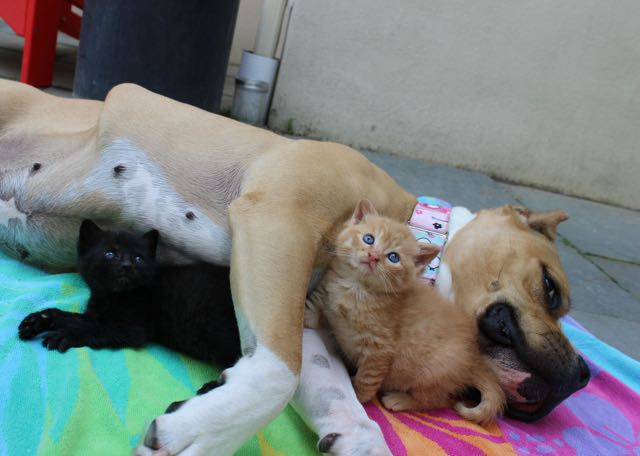 dog-adopted-kitten-cat-9
