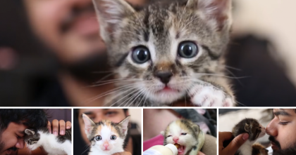 Five Motherless Kittens Almost Died, But This Man Did Something…