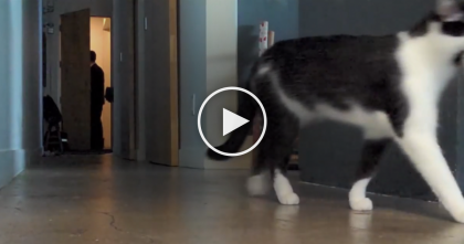 He Setup A Secret Camera To Record What His Cat Does When He Leaves… I Knew This Was TRUE!