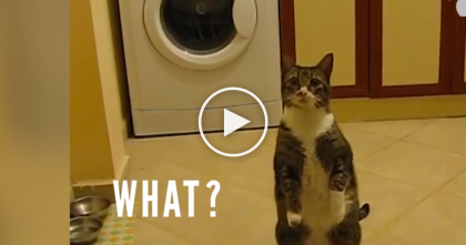 It's Impossible Not To Laugh When You See What These Cats Are Doing!!! LOL