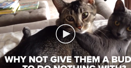 More Cats Are Always Better, But When You See This Video… Wow, I Totally Agree!