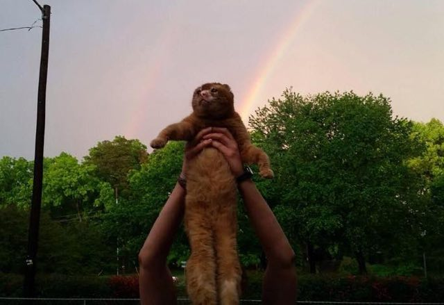 russell-the-cat-rainbow
