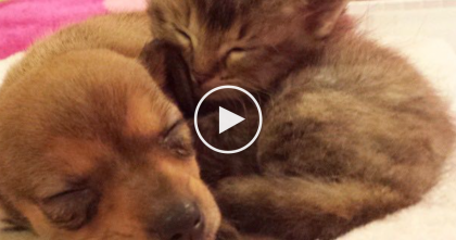 They Paired This Orphaned Kitten With Someone Special, When You See It… You Won't Stop Smiling!