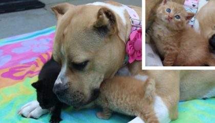 They Rescued These Homeless Kittens, But Didn't Expect The Dog To Do This…