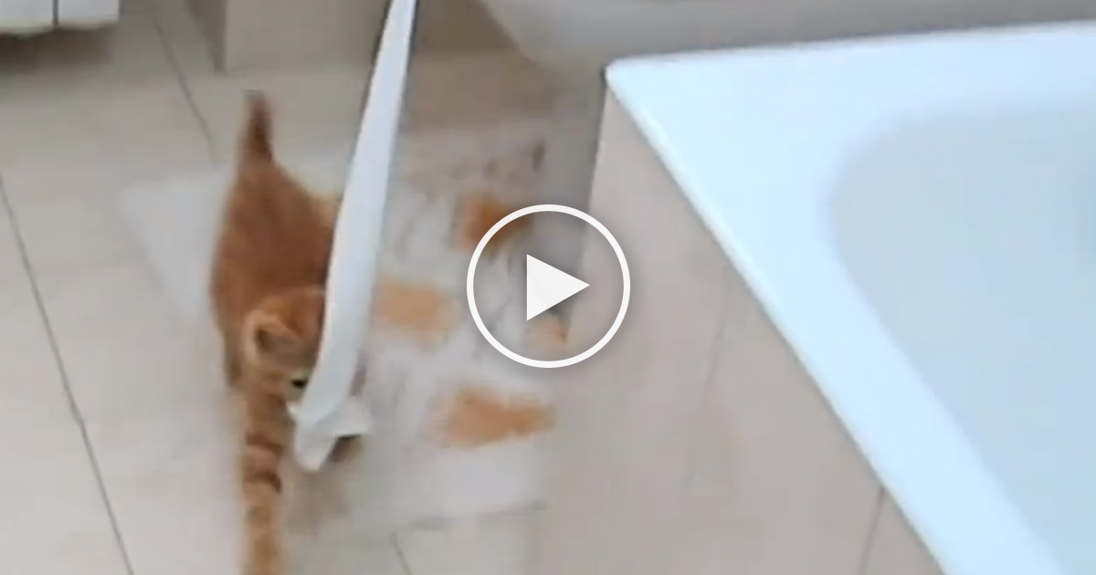 This Cat Won T Leave The Toilet Paper Alone But Watch