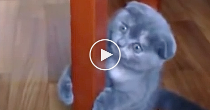 This Kitten Discovered How To Hop Like A Little Bunny… I CAN'T Believe What He's Doing!