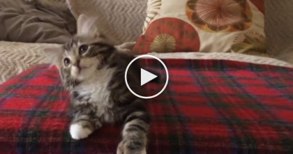 This Kitten Has The 'Dance' Moves You Can't Miss…Uptown 'Kitty' Funk Is In The House!