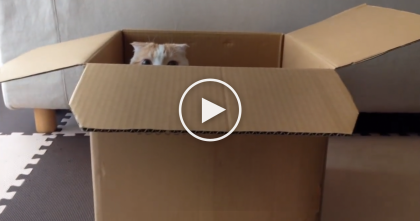 This Kitty Discovers A Box And…Now You See Me, Now You Don't, LOL.