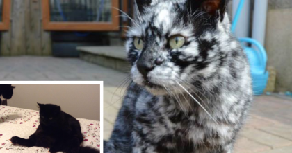 This Cat Started Changing Colors, But When You See Him Now? You Won't Believe It…