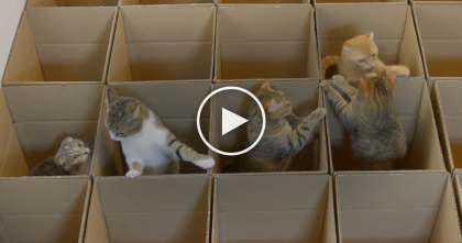 What Happens When You Give 20 Boxes To 9 Cats?  You're About To See It… Best Game EVER.