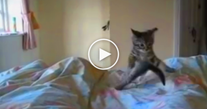 Watch What Happens When This Energetic Kitten Greets Her Owner Every Morning.